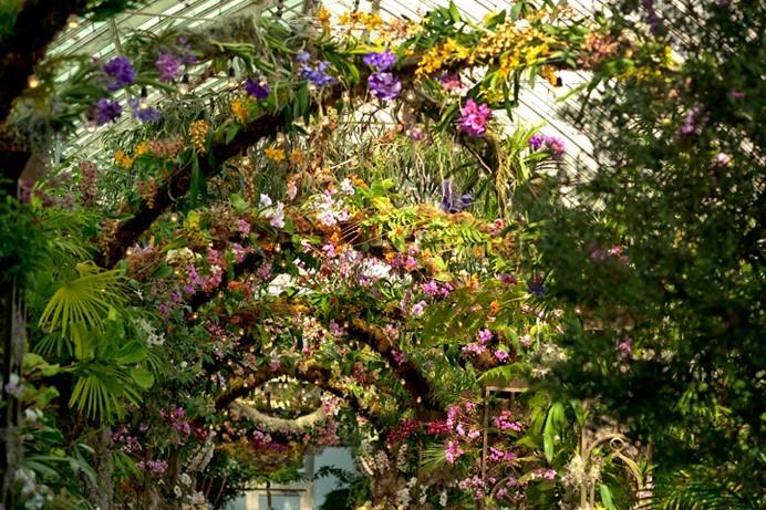 美国纽约植物园