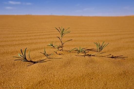 沙特阿拉伯沙漠